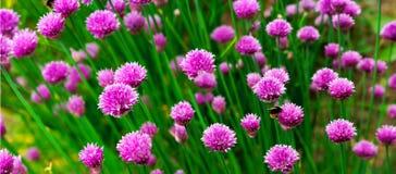 panorma χορταριών λουλουδιών Στοκ Εικόνες