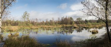 Panorma of a beautiful moor landscape. In the lueneburger heide royalty free stock images