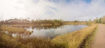 Panorma of a beautiful moor landscape. In the lueneburger heide stock photos