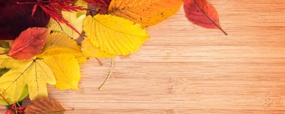 Panorma of colorful autumnal leaves, wood background with copy space. Panorma of colorful autumnal leaves, wooden background with copy space stock photos
