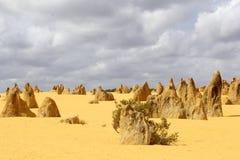 Panormama pinakla krajobraz w Nambung parku narodowym, zachodnia australia Obraz Stock