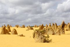 Panorama of the Pinnacles in Nambung National Park, Cervantes, Western Australia Stock Image