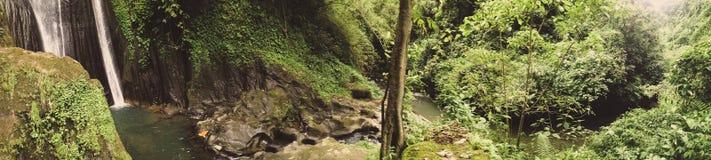 Panoroama在有瀑布的密林 库存图片