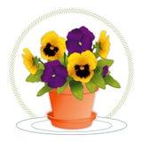 pansies золота flowerpot пурпуровые Стоковая Фотография