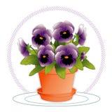 pansies лаванды flowerpot Стоковые Изображения
