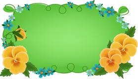 pansies приветствиям карточки знамени Стоковая Фотография