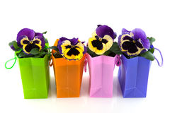 Pansies. In row colorful bags Royalty Free Stock Photo