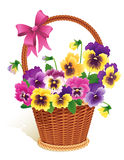 Pansies Stock Images
