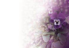 Pansies as letter background. Elegant design: Pansies as letter background Stock Photography