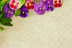 Pansies border copy space background. Border of purple and red pansy flowers with leaves on vintage beige linen background, copy space Royalty Free Stock Photography