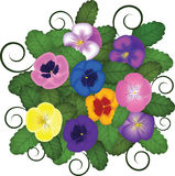 Pansies bouquet Stock Photo