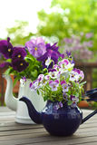 Pansies bouquets copy space background Stock Photos
