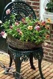 Pansies - de lentebloemen Stock Foto's