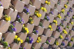 Pansies in einer Wand Stockbild