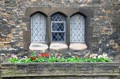 Pansies framme av gotiska fönster Fotografering för Bildbyråer