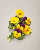 Pansies greeting card Stock Images