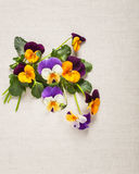 Pansies greeting card Royalty Free Stock Photos