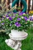 Pansies im Frühjahr gepflanzt im Topfbeifallgarten Lizenzfreies Stockfoto