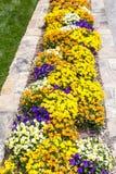 Pansies im Steinpflanzer Stockbild