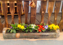 Pansies in planter Stock Photos