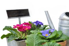 Pansies in pot with sign Royalty Free Stock Photography