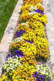 Pansies in Stone Planter. Many colorful pansies in a formal garden Stock Image