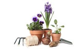 Pansies und Hyazinthe mit Gartenarbeit-Hilfsmitteln Stockfoto