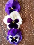 Pansies on a vintage book cover Stock Photos