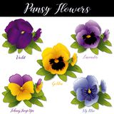 Pansies, Violet, Lavender, Golden, Sky Blue and Johhny Jump Ups Violas Royalty Free Stock Photography