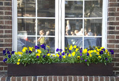 Pansies in a window box Royalty Free Stock Photo