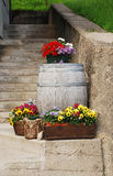 Pansies and Wooden Barrel Stock Photos