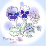 Pansy στο μπλε υπόβαθρο Στοκ Εικόνες