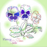 Pansy на зеленой предпосылке Стоковая Фотография
