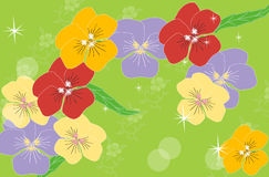 Pansy. Royalty Free Stock Photos