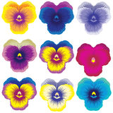 Pansy. Big Selection of Various pretty Flowers Isolated on White Background Royalty Free Stock Image