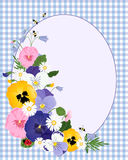 Pansy border Royalty Free Stock Image