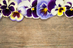 Pansy. Border of viola tricolor flowers on a wooden background Royalty Free Stock Images