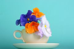 Pansy bouquet. Colorful spring pansies in teacup and saucer stock photo