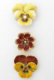 Pansy Brooches Royalty Free Stock Photos