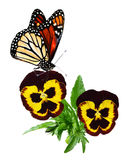 Pansy and Butterfly Stock Photo