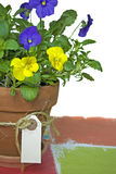 Pansy in clay pot with tag Royalty Free Stock Photography