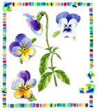 Pansy draw illustration for herbarium Royalty Free Stock Image
