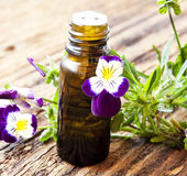 Pansy Essence Stock Photography
