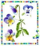 pansy för drawherbariumillustration Royaltyfri Bild