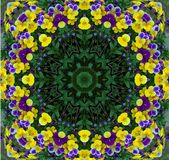 Pansy fantasy background Royalty Free Stock Image
