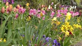 Pansy Flower en el parque Ciérrese encima de tiro almacen de video
