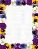 Pansy Flower Frame, Polka Dot Background. Spring pansy flower frame, polka dot background. Violas in lavender, purple, blue and gold, copy space for posters Stock Images