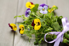 Pansy flower with gift bow Royalty Free Stock Photos