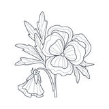 Pansy Flower Monochrome Drawing For Coloring Book. Hand Drawn Vector Simple Style Illustration Royalty Free Stock Photos