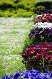 Pansy Flower Pots Royalty-vrije Stock Afbeelding